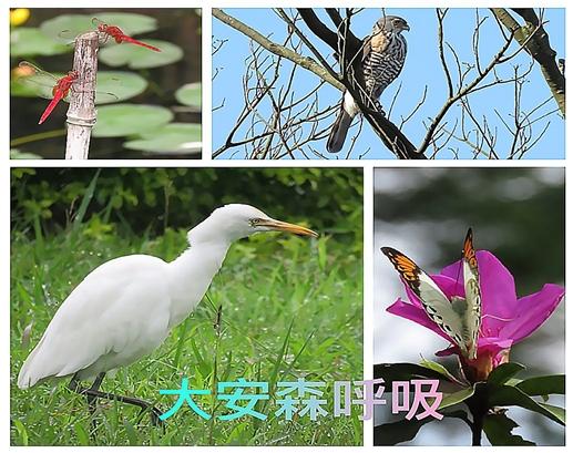 107年臺灣閱讀節-漫步森林趣-大安森呼吸(生態導覽)活動