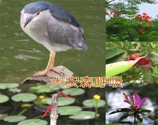 108年臺灣閱讀節-漫步森林趣-大安森呼吸(生態導覽)活動