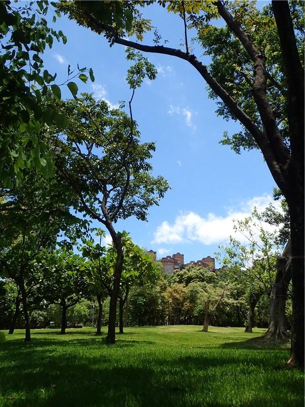 大安森林公園一隅