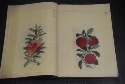 金石昆蟲草木狀(2冊)